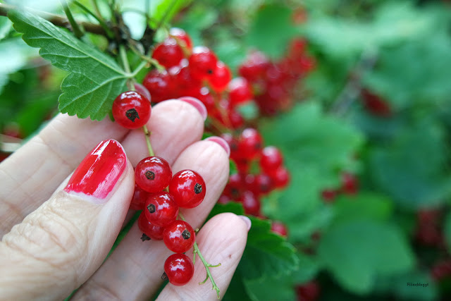 Früchte aus dem Garten
