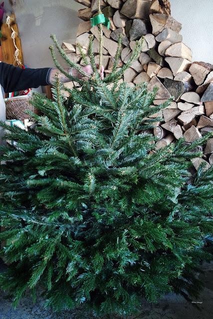Weihnachtsbaum Filines Testblog
