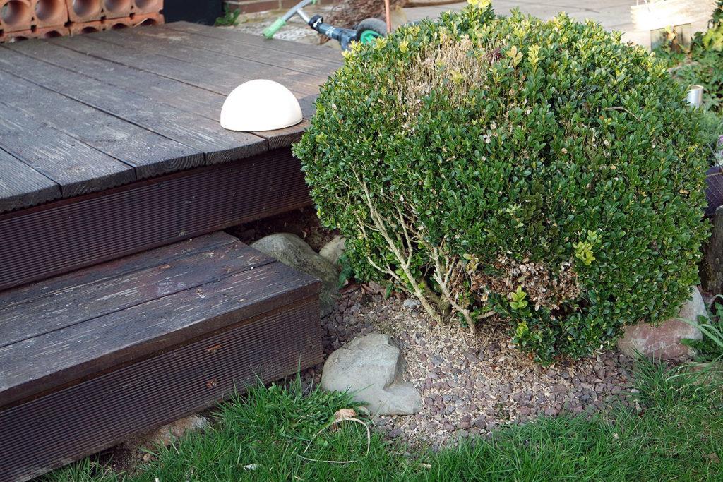 Kübel-Bepflanzung im Garten - die Freiluftsaison startet