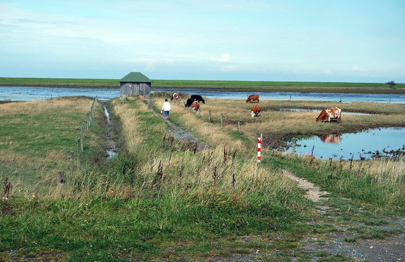 Centerparc Nordseeküste