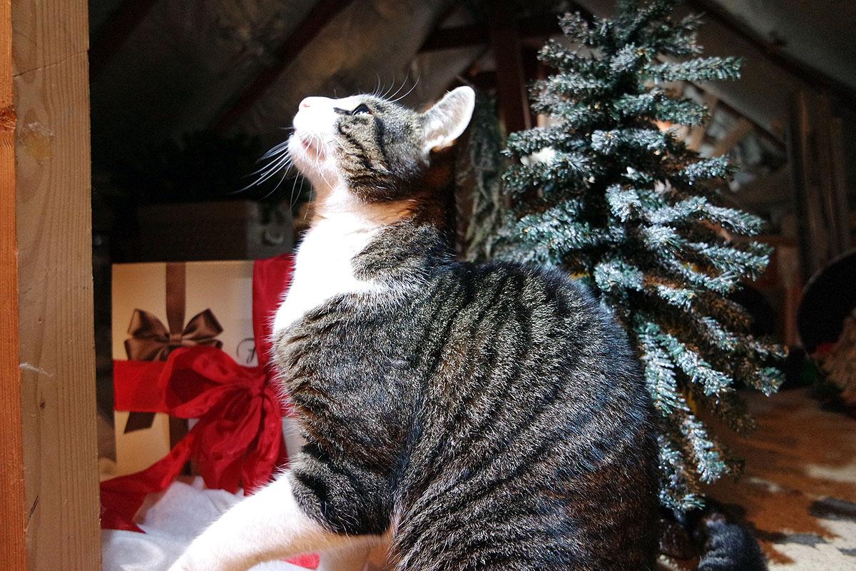 katzenliebe meine katze mag es weihnachtlich gourmet gewinnspiel. Black Bedroom Furniture Sets. Home Design Ideas